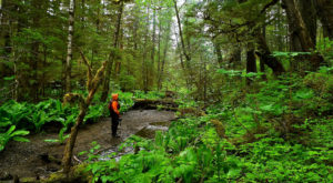 You Might Be Surprised To Learn That Alaska Has A Rainforest, And It's The Largest In The US