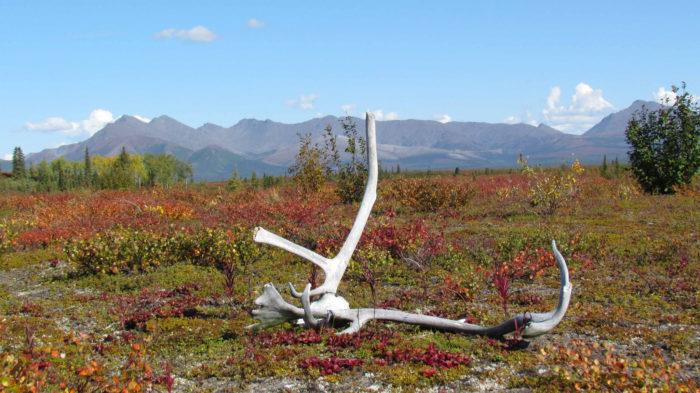 Flickr - Western Arctic National Parklands