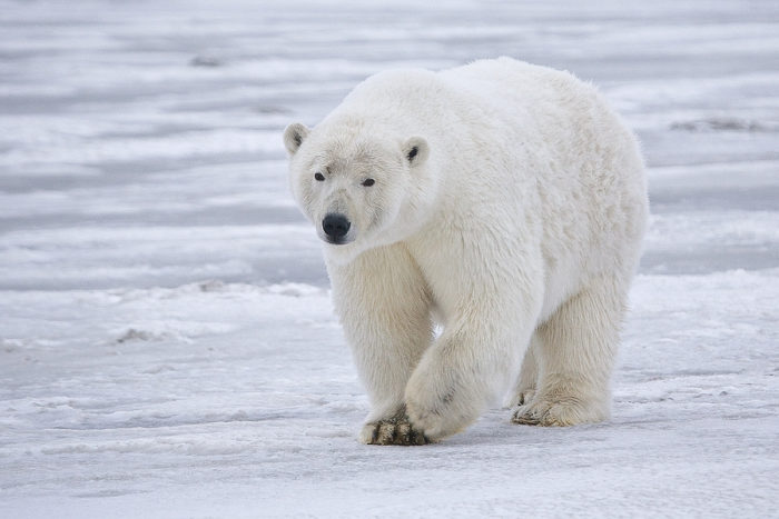 2. Or if we have pet polar bears.