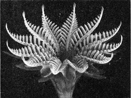 Fossilcyad
