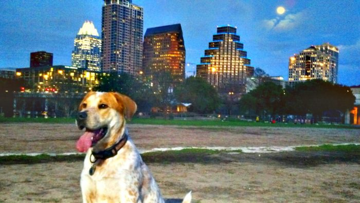 9. Spent your Friday night playing with your pup at the dog park