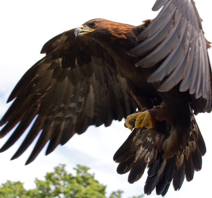 Golden eagles like to catch the drafts of air moving up the mountains.