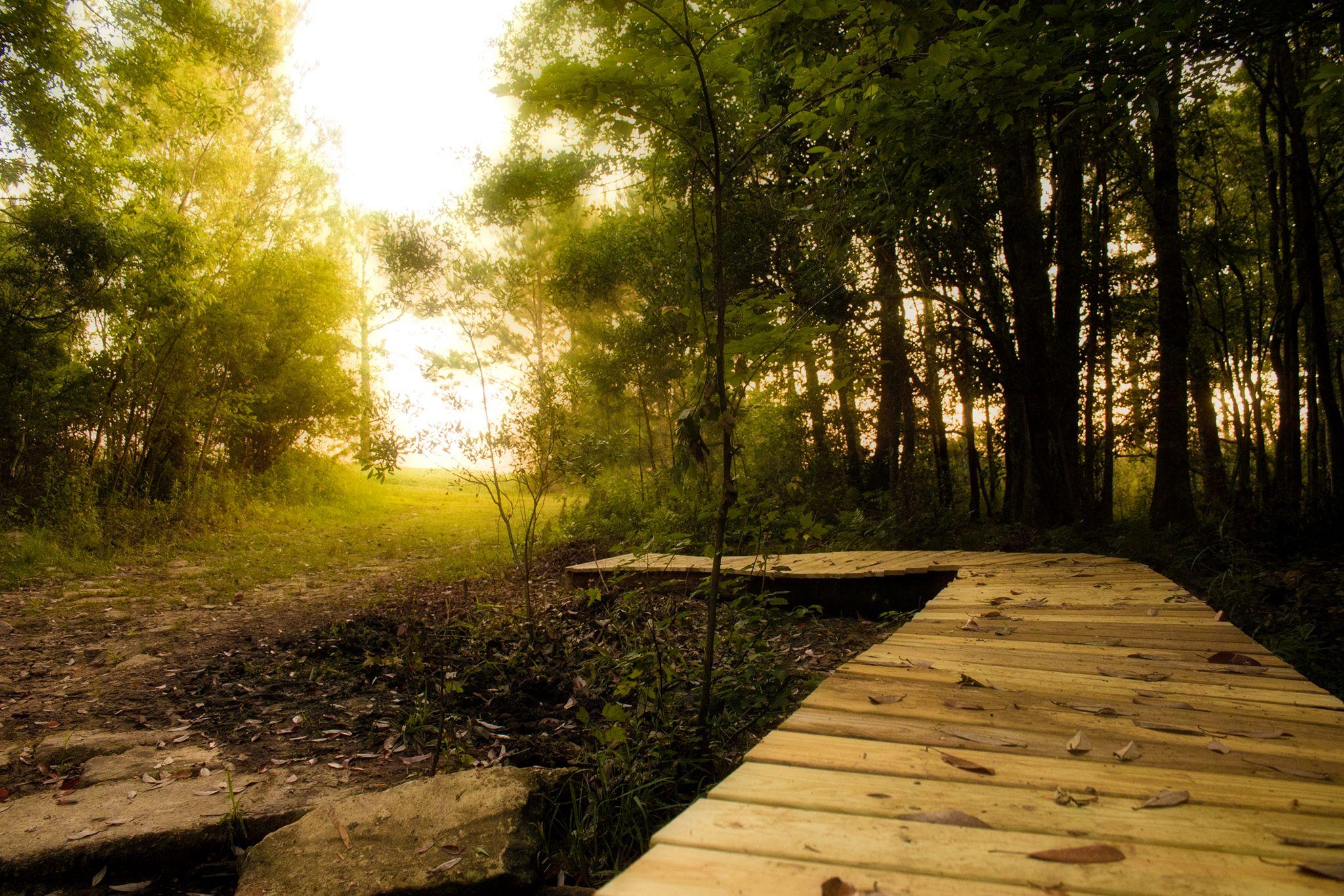 Graham Creek Nature Preserve Hidden Gem In Foley Alabama