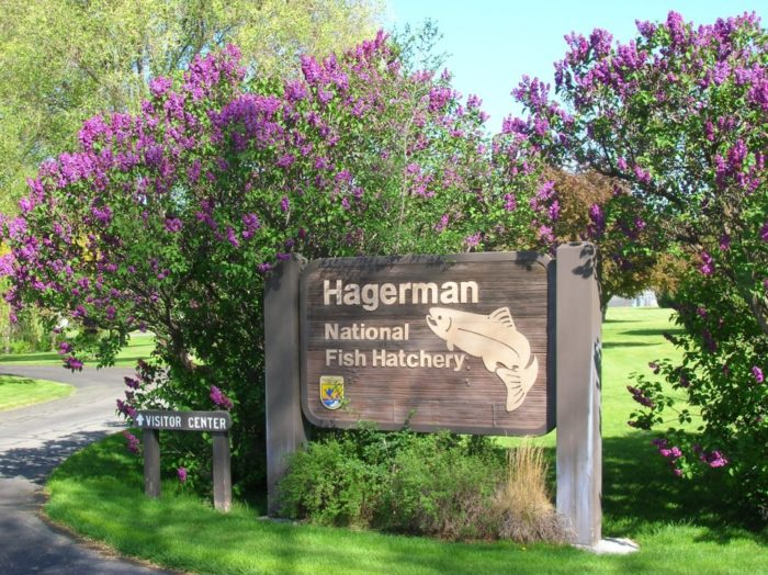 Hagerman -- the world's leading trout producer -- is also home to the Hagerman National Fish Hatchery.