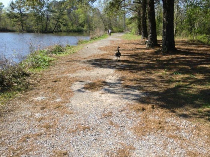4. Martin Wildlife Park Trail