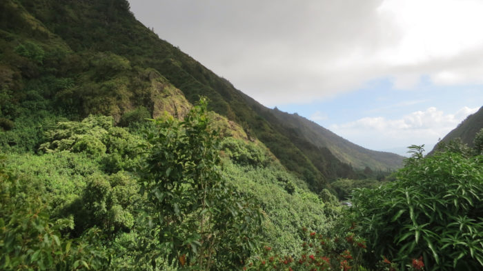 The valley is considered sacred, and was once kapu (off limits) to all but Hawaiian royalty. In the late 15th century, Maui's ruler, Kaka'e, designated Iao Valley as an Ali'i burial ground, and in 1790 Kamehameha the Great defeated Kalanikupule and the Maui army during his quest to unify the islands during the Battle of Keaniwai.