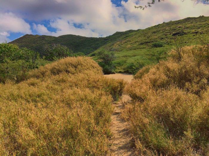 6. Kaiwi Shoreline Trail