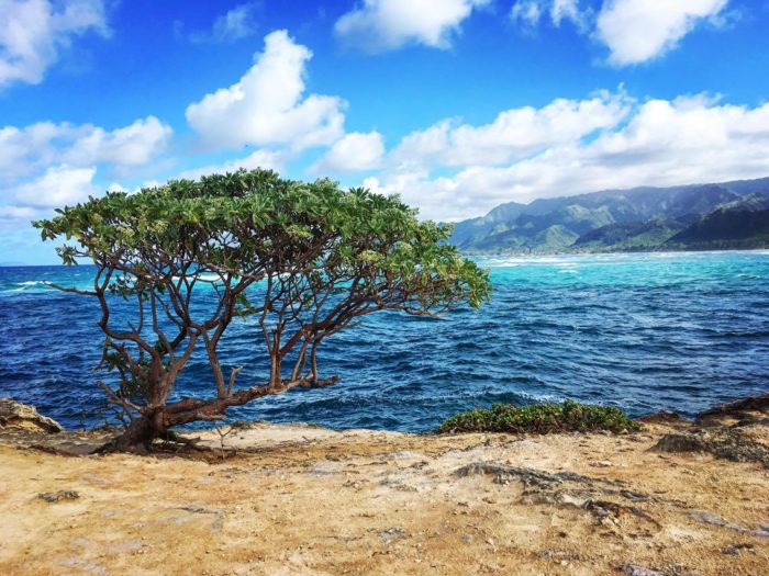 15. Laie Point State Wayside