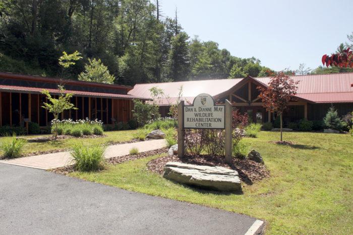 Lees-McRae wildlife rehab center
