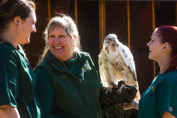 Lees-McRae wildlife rehab center - CREDIT Justin Reich