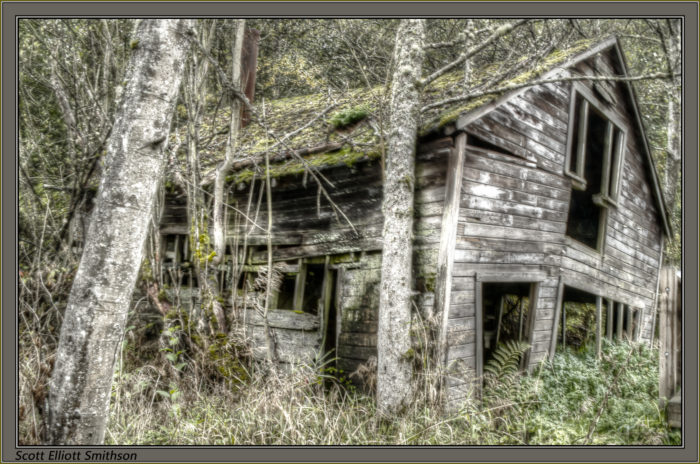 3. This is an old abandoned house in the Mercer Slough Park area of Bellevue.