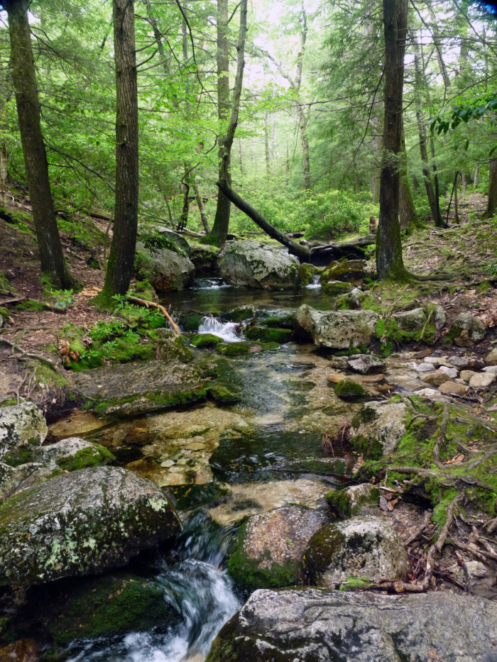5. Scenic trails will surround you with lush forest and beautiful rock formations.