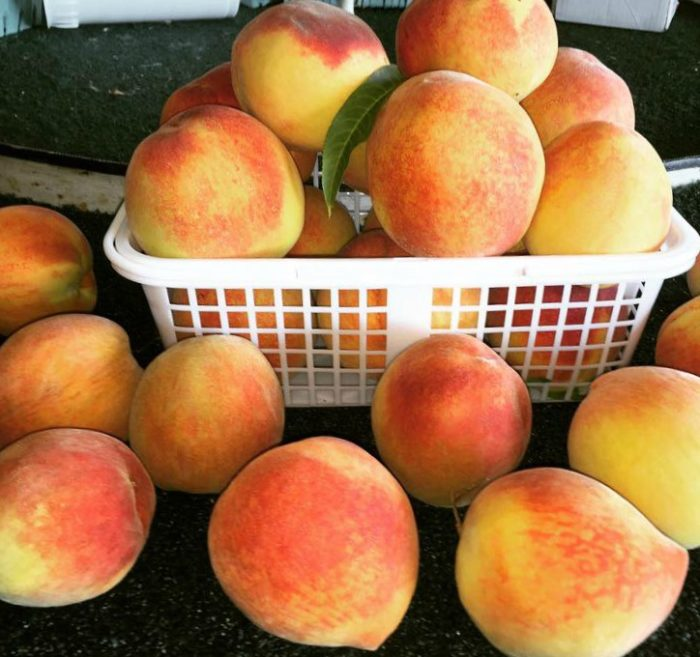 Peach Park offers a great selection of produce, including the freshest peaches you'll ever eat.