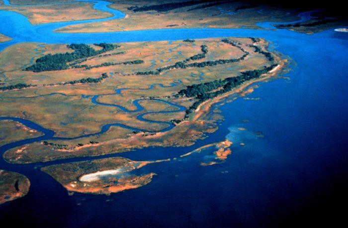Pine_Island,_ACE_Basin_National_Estuarine_Research_Reserve