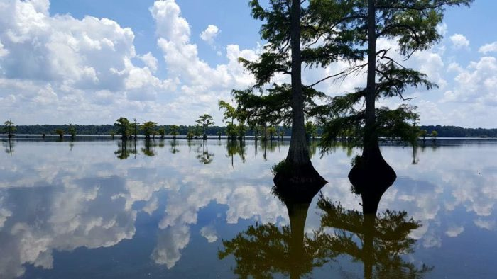 7. Reelfoot Lake