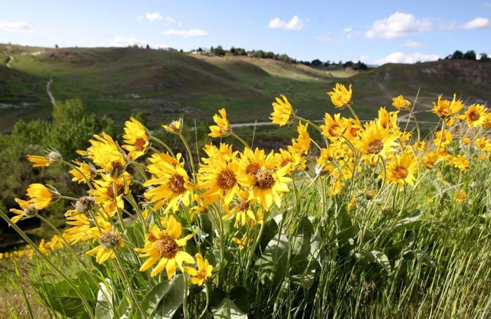The trails are awash with vibrant wildflowers, native plants, grazing wildlife, and so much more.