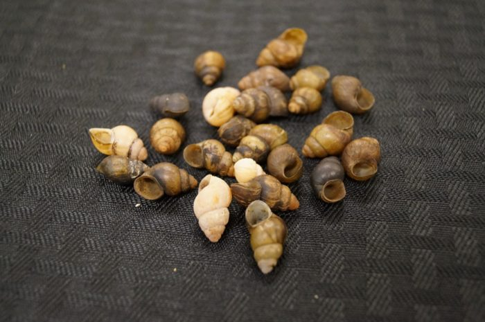 9. There are 13 snail species living in the Cahaba River that don't exist anywhere else in the world.