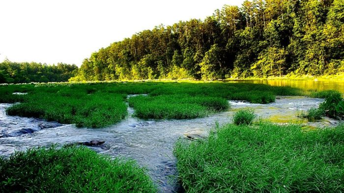 8. In September 2002, a portion of the river was established as the Cahaba River National Wildlife Refuge.