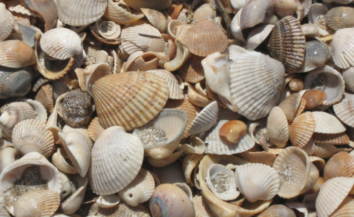 This is also an excellent place to collect shells!