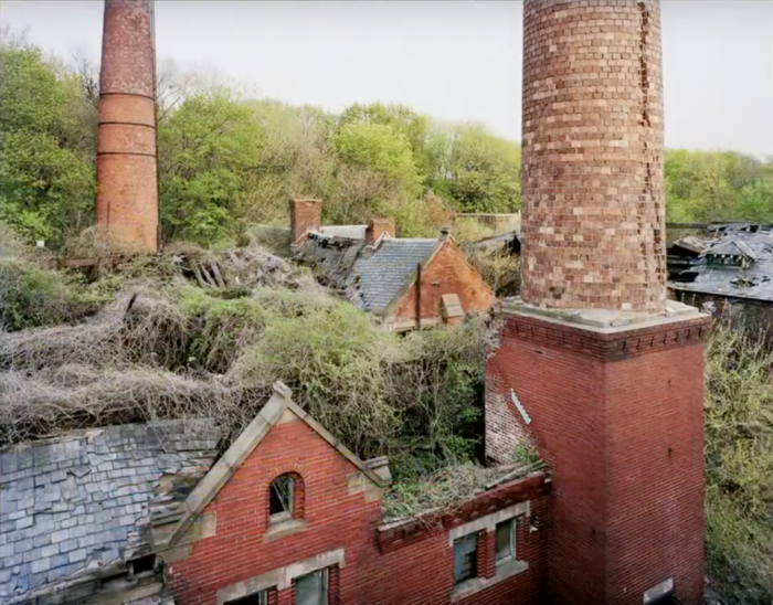It's an amazing glimpse into what might happen if urban landscapes were allowed to return to nature.