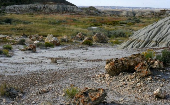 3. A walk through time: The Petrified Forest has massive wood fossils from prehistoric trees surrounded by stunning scenery.