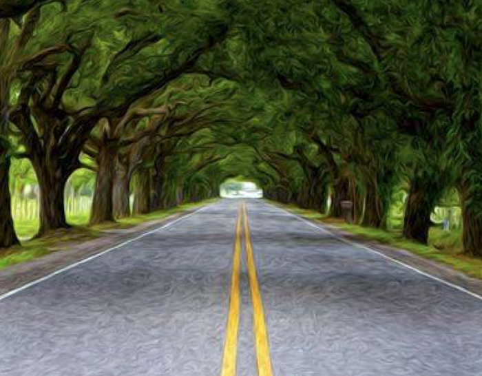 This gorgeous photoshop rendering captures the beauty of this tree tunnel so well.