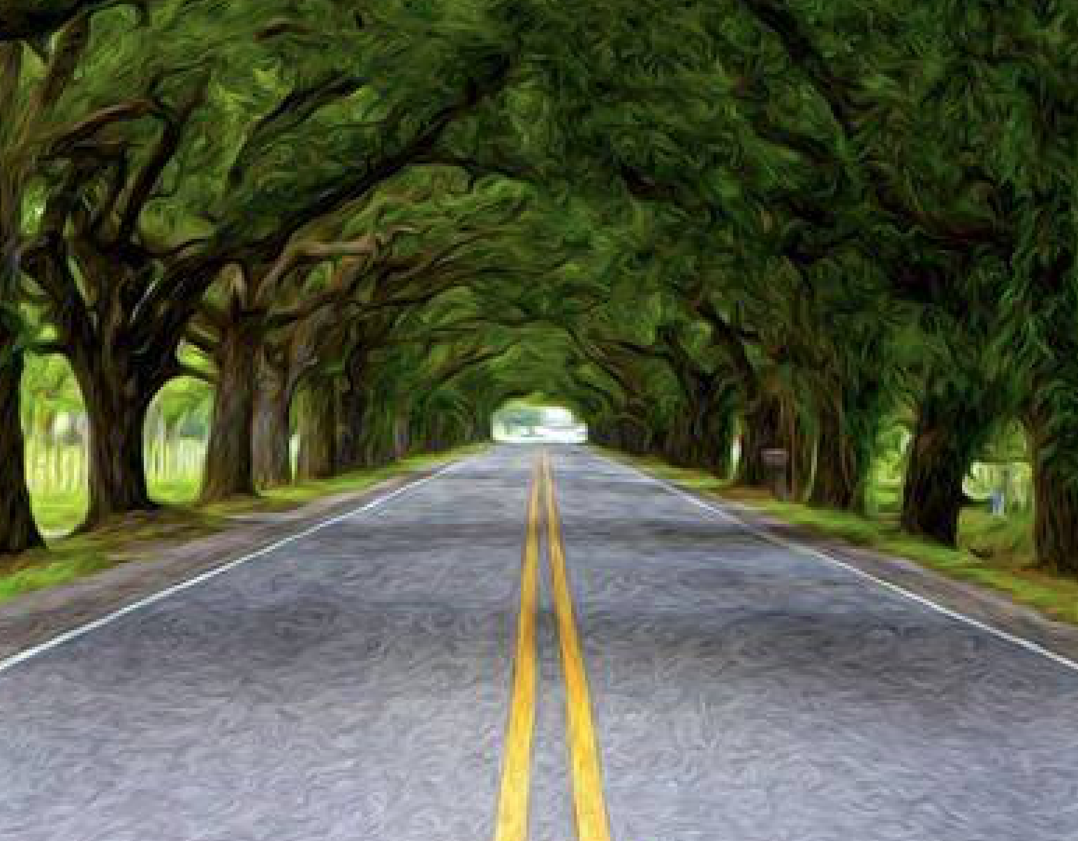 Explore The St Bernard Highway Tree Tunnel In Louisiana