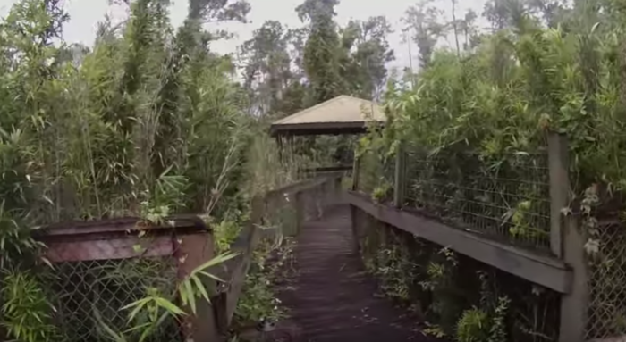 The explorers in the video wind their way through overgrown boardwalk trails, abandoned lion cages and even buzzing swarms of mosquitoes.