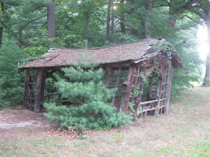3. Shade Swamp Sanctuary (Farmington)