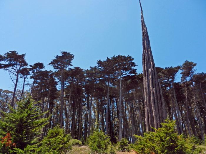 8. Wander Around the Presidio
