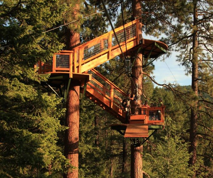 15. Take a canopy tour through a national forest.