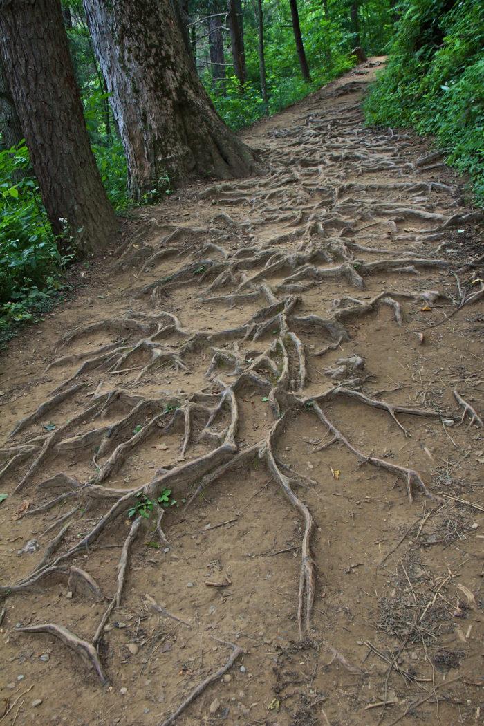1. Trillium Gap Trail