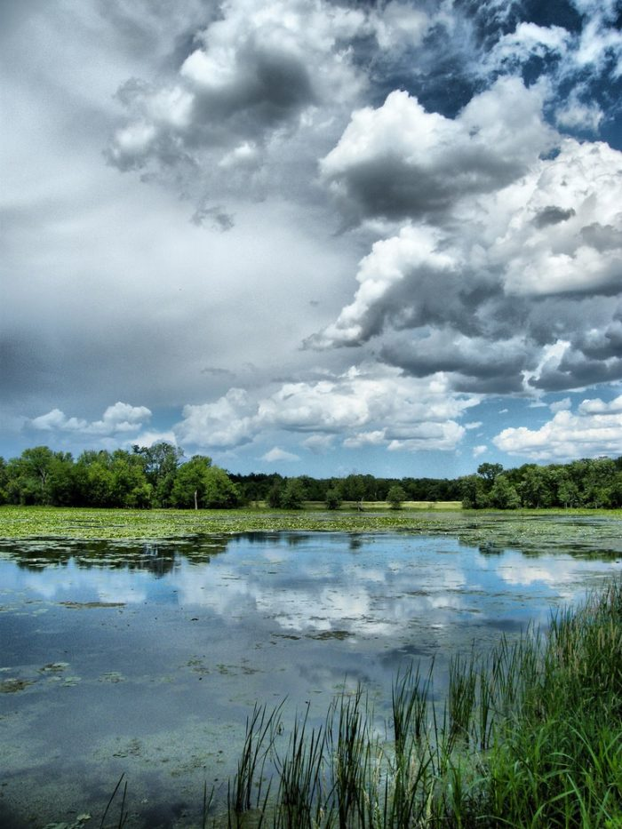 3. Timber Lake Forest Preserve