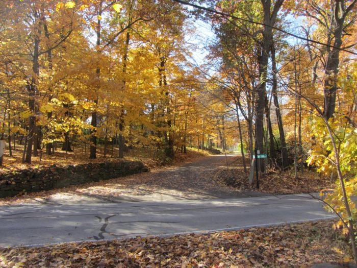 5. Fullersburg Forest Preserve