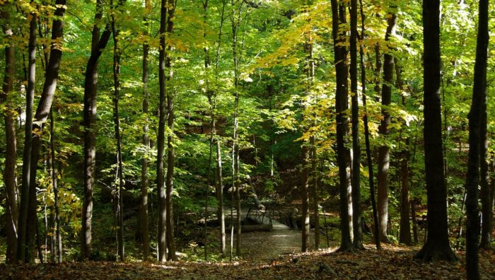 7. Hammel Woods County Forest Preserve