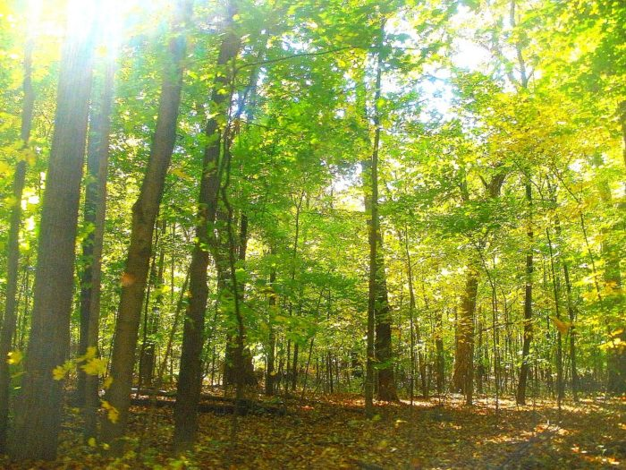 8. Ned Brown Forest Preserve