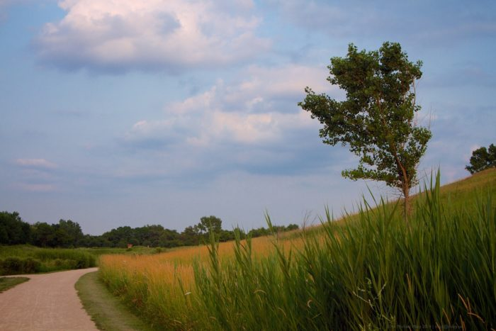 10. Meacham Grove County Forest Preserve
