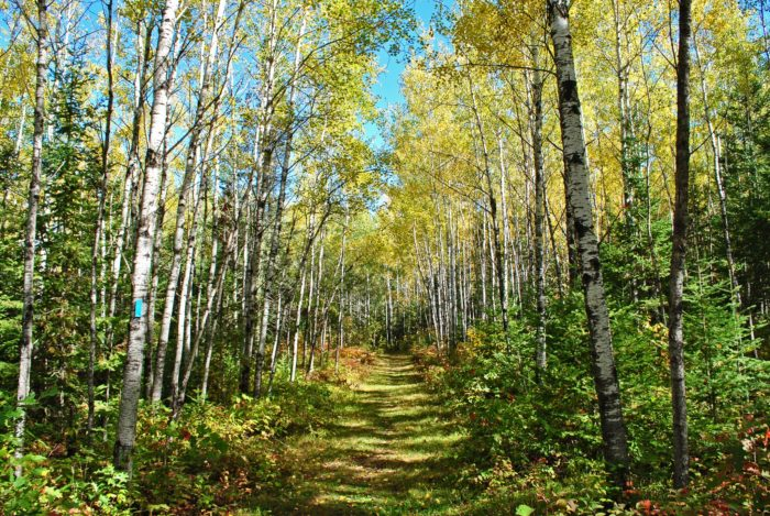 A lot of the trail is undeveloped, but more is becoming developed each year.