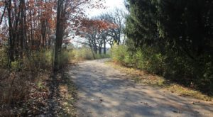 This Serene Illinois Trail System Is The Ultimate Urban Escape
