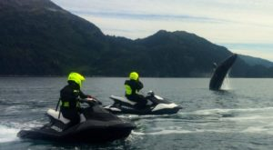 Most People Have No Idea You Can Do This One Awesome Activity In Alaska