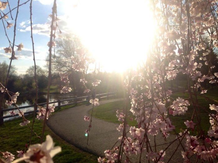 Arboretum & Gardens