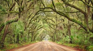 This Tunnel Of Trees In South Carolina Is Positively Magical And You Need To Visit