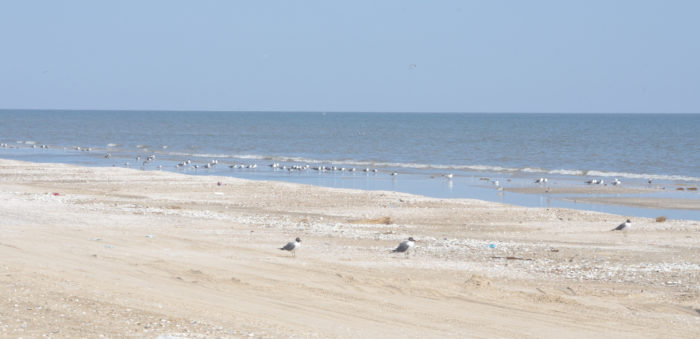 Nicknamed the Cajun Riviera, Holly Beach received a beating during Hurricane Rita in 2005 and Hurricane Ike in 2008.