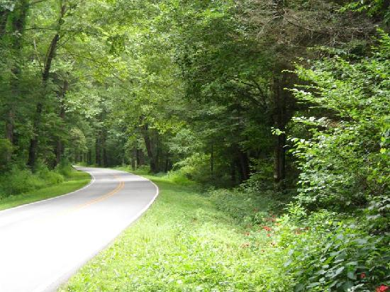 You'll find the Mount Pisgah Campground in the Pisgah National Forest, along the Blue Ridge Parkway.