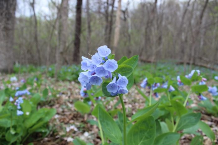 In the spring you can see some of the gorgeous flowers on the trail.