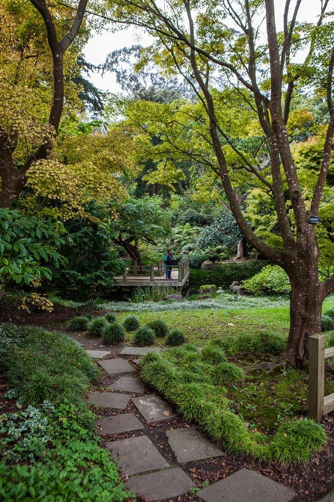 8. Stroll through the San Francisco Botanical Garden.