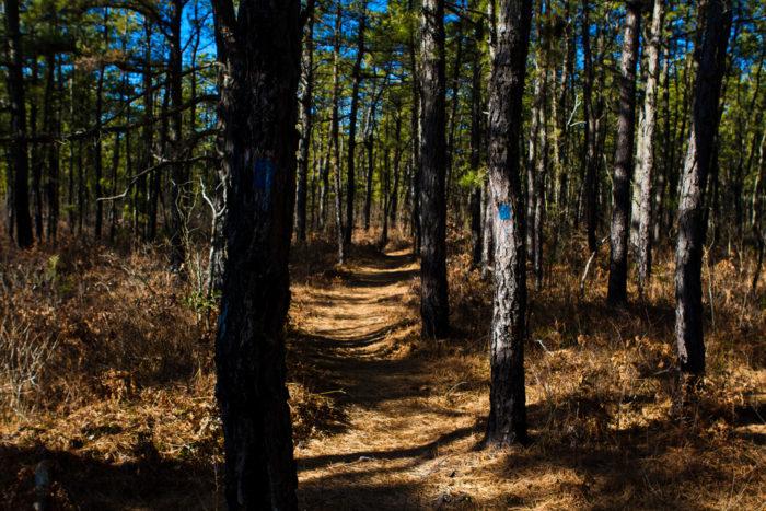 9. Belleplain State Forest