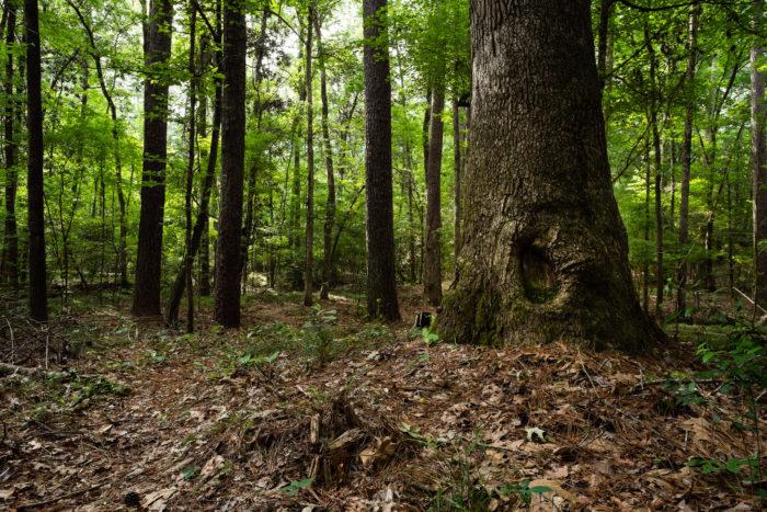 13. Caroline Dormon Trail, Kisatchie National Forest