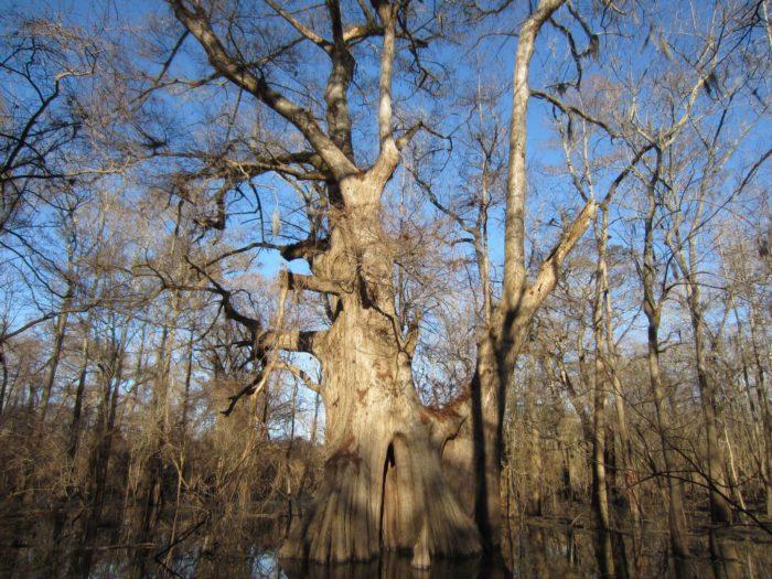 10. Big Cypress Trail, Cat Island National Wildlife Refuge