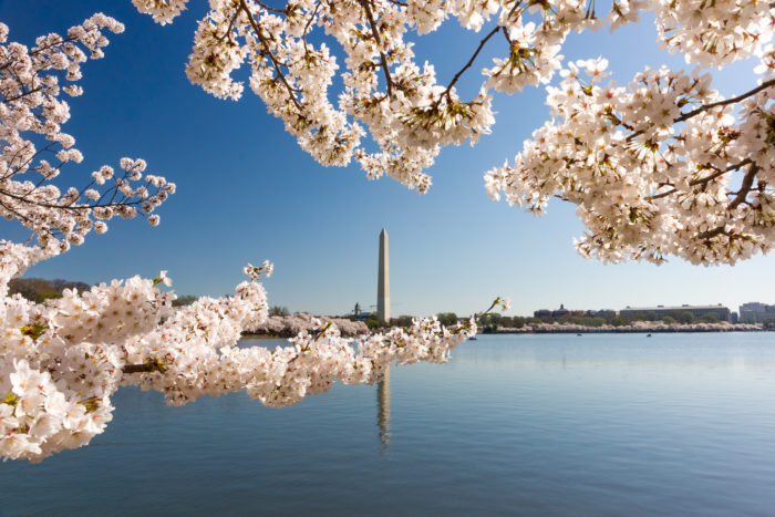 4. Cherry Blossoms at Tidal Basin